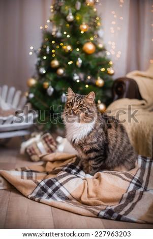 Tabby cat plays at the Christmas tree, Christmas holidays - stock photo