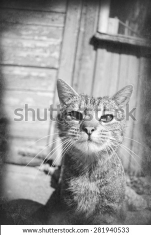 Tabby cat portrait, black and white vintage grunge photo - stock photo