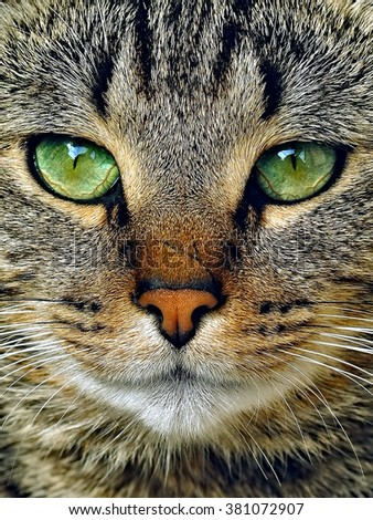 tabby cat potrait with green eyes - stock photo