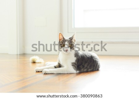 Tabby cat relaxing at home - high key portrait  - stock photo