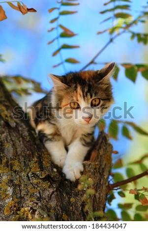 Tabby Cat sitting on a tree  - stock photo