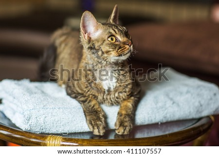 Tabby cat sitting on blue towel looking to the side  - stock photo