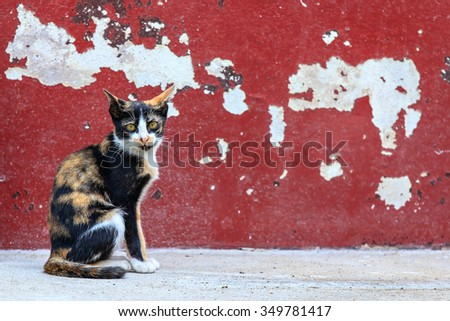 Tabby cat sitting on crack red wall background - stock photo