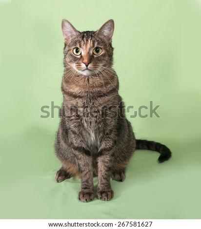 Tabby cat sitting on green background - stock photo