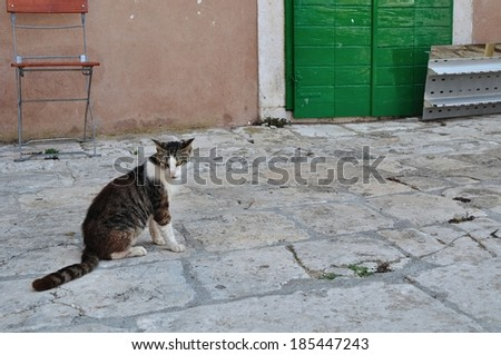 Tabby cat sitting on the ground. Korcula, Croatia. Space on right side - stock photo