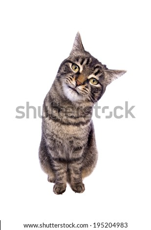 Tabby cat sitting with funny expression tilting head to the side looking isolated on white background - stock photo