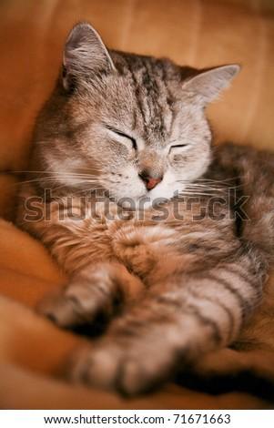 Tabby cat sleeping on the sofa - stock photo