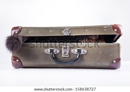 tabby cat. suitcase - stock photo