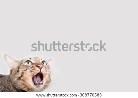 Tabby cat was shocked in gray background.Place for text - stock photo