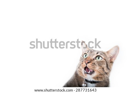 Tabby cat was shocked in white background - stock photo