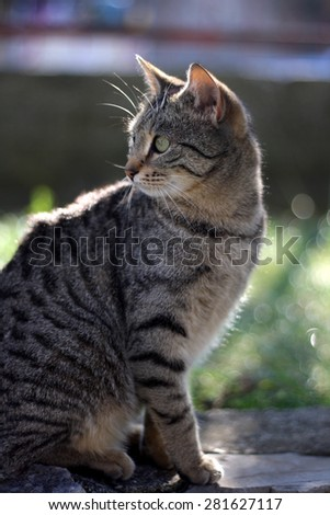 Tabby cat with big green eyes in the garden. Selective focus.  - stock photo