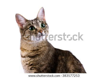 Tabby cat with green eyes isolated over white background - stock photo