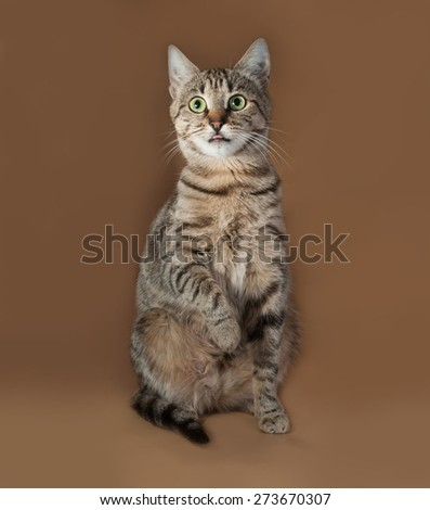 Tabby cat with green eyes sitting on brown background - stock photo