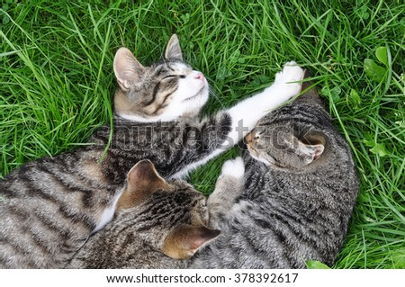 tabby cats are sleeping on the grass  - stock photo