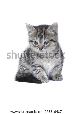 tabby kitten - stock photo