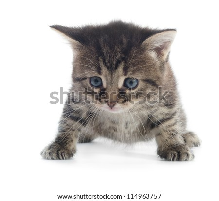 tabby kitten closeup isolated on white background shallow dof - stock photo