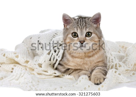 Tabby kitten on a white background - stock photo