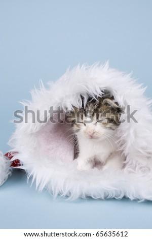tabby kitten sleeping in xmas hat on blue background - stock photo