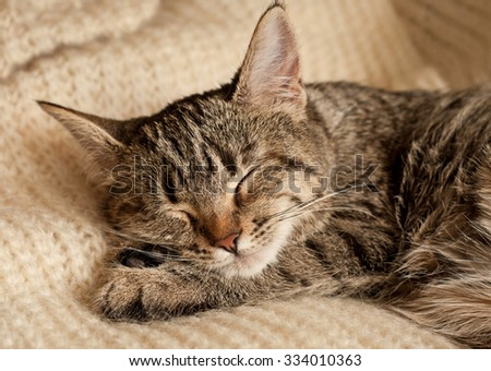Tabby kitten sleeping on a wool scarf at home - stock photo