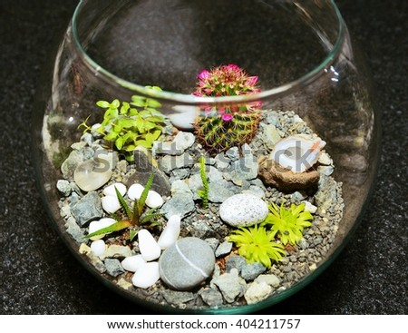 Table top indoor decorative miniature garden in clear glass with cactuses and succulents. Decorative glass vase with succulent and cactus plants. Glass interior terrarium with succulents and cactuses. - stock photo