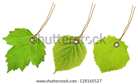 Tag label green leaf isolated on white background. - stock photo