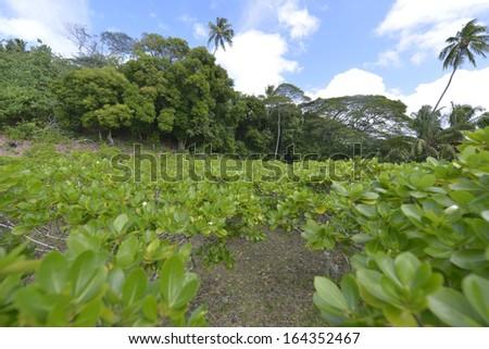 Tahitian monoi flower garden in Bora bora - stock photo