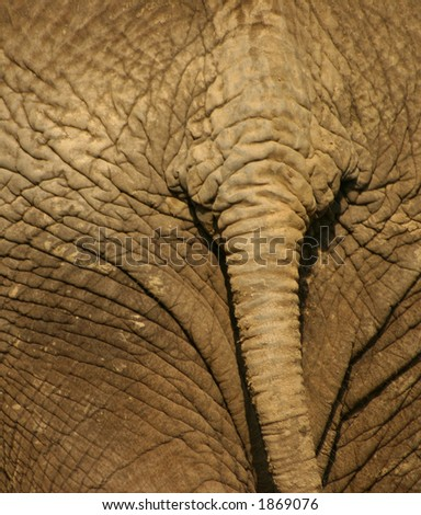 Tail of an elephant - stock photo