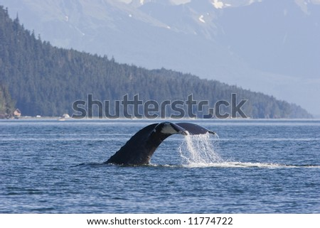 Tail of humpback whale in front of mountain range. - stock photo
