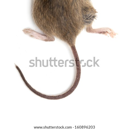tail of the mouse. macro - stock photo