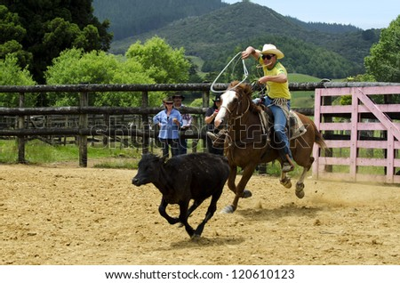 TAIPA - DECEMBER 01:Cowboy Successfully Roping a steer during a rodeo show on December 01 in Taipa, New Zealand. The roping contest has originally developed from cowboys who hold cattle for doctoring. - stock photo