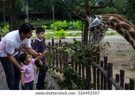 TAIPING, MALAYSIA 2 JUN 2015 : Tourist feeding a giraffe in captivity on Jun 2.  - stock photo