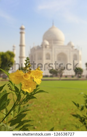 Taj Mahal and a yellow flower. India. - stock photo