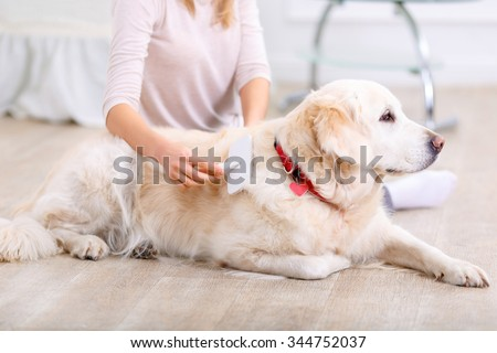 Take care of your little friends. Close up of  brush in hands of pleasant caring young woman  brushing her dog while having fun on the floor - stock photo