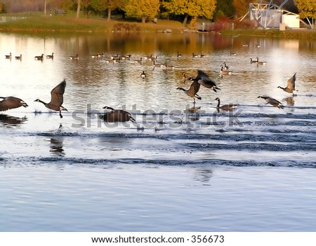 Take off in sunset - stock photo
