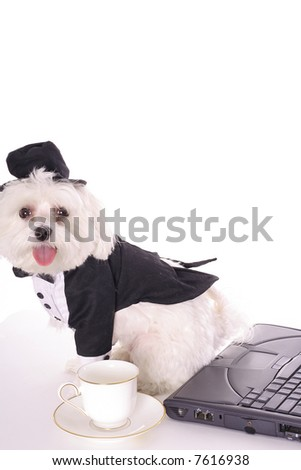 Taking care of doggy business - stock photo
