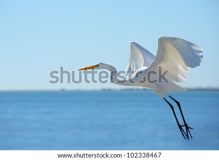 Taking Off A white great egret takes off from a Florida beach. - stock photo