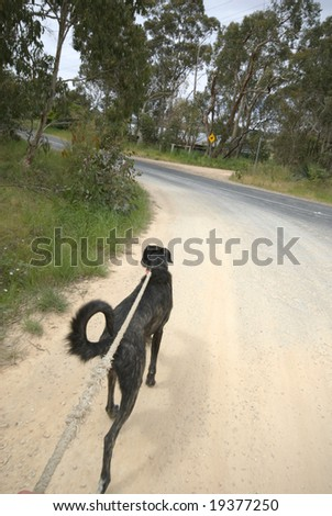 Taking the Dog for a walk - stock photo
