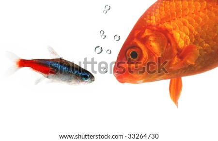 talking fishes - stock photo