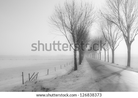 Tall bare trees besides a country road in winter. It's a foggy winter morning, everything is covered with snow and the sun appears slowly. - stock photo