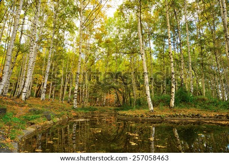 Tall birch trees in autumn colors are reflecting in water. - stock photo