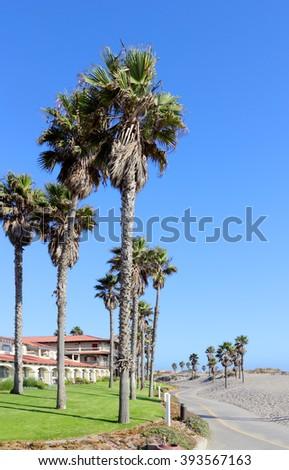 Tall coastal palms growing next to warm sands of Mandalay Beach in Oxnard, California - stock photo
