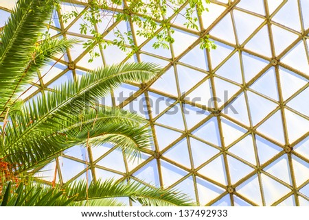 tall, colorful tropical fern plant inside a glass dome - stock photo