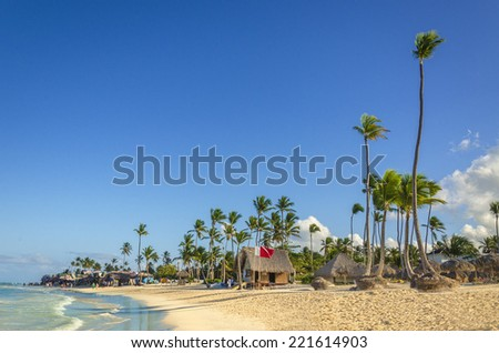 Tall exotic palm tree on one of the Caribbean beach - stock photo