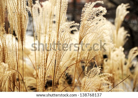 Tall Grass - stock photo