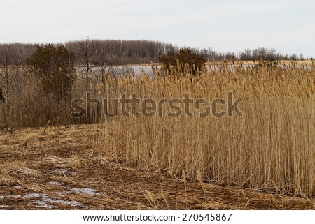 Tall grasses in wetlands in protected refuge  - stock photo