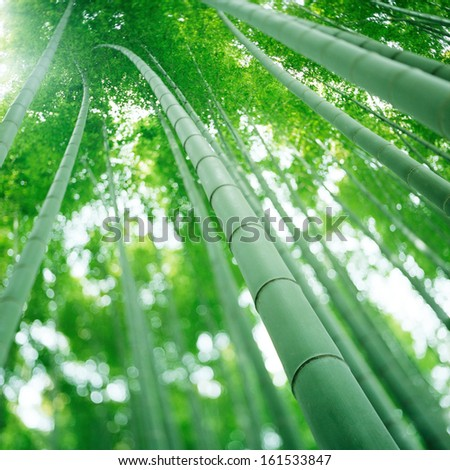 Tall green bamboo going extremely high. - stock photo