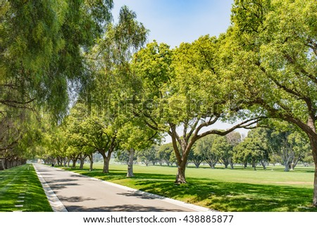 Tall green trees line a park lane under a summer blue sky in southern California. - stock photo