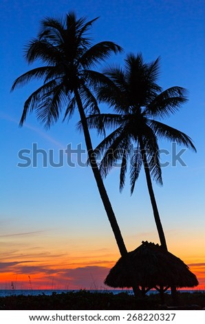 Tall palm trees and a thatched roof shelter are silhouetted by a colorful sunset sky on the Gulf Coast of Florida's Sanibel Island. - stock photo