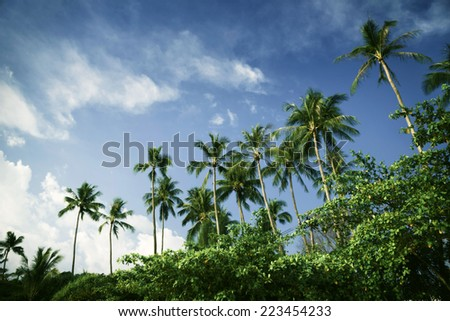 Tall palm trees on a background of blue sky - stock photo