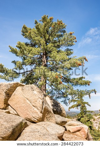 Tall pine tree guards Keller Peak Fire Lookout area, on the Rim of the World Scenic Byway, near Running Springs, California. - stock photo